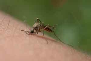 Le punture di zanzara