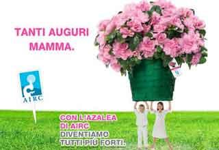 Festa della Mamma e AIRC La Festa della Mamma e liniziativa dellAIRC (Associazione Italiana per la Ricerca sul Cancro)