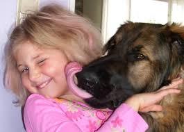 cane Morsicatura di cane: cosa fare?